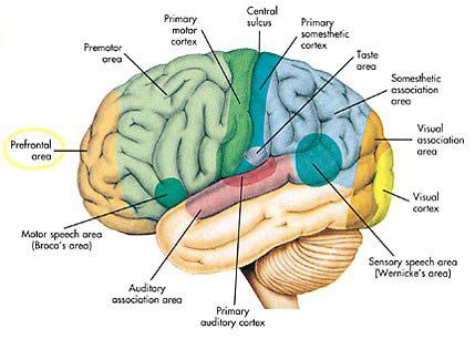 5 อาการเสี่ยงเป็นโรคหลอดเลือดสมอง